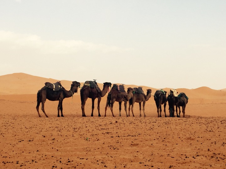 7 Things to know BEFORE you go on a Sahara Desert Excursion | Marrakech